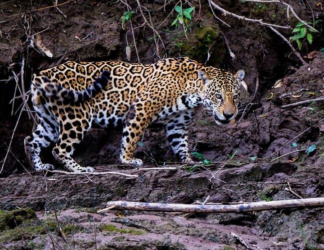 Amazon Forest Travel Package Iletours