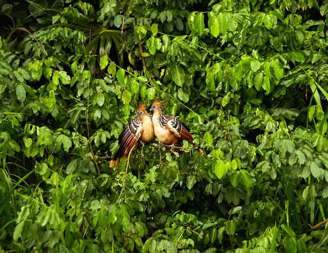 Amazon Rainforest Expedition