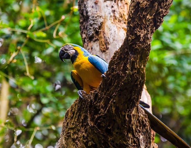 Amazon Rainforest Holiday Deals Peru iletours