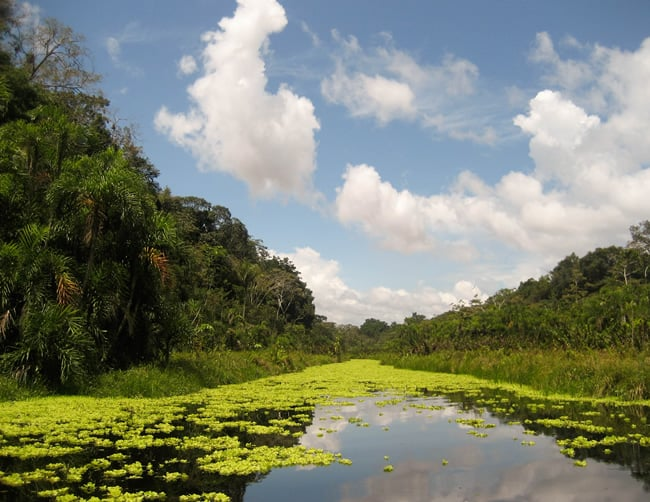 Amazon Rainforest Travel Packages Iletours
