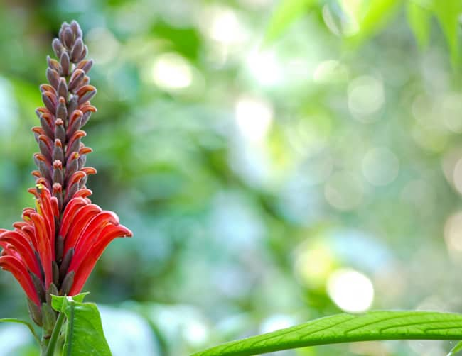 Amazon Rainforest Vacation Packages Iletours