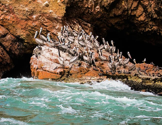 Ballestas Islands Boat Tour Luxury