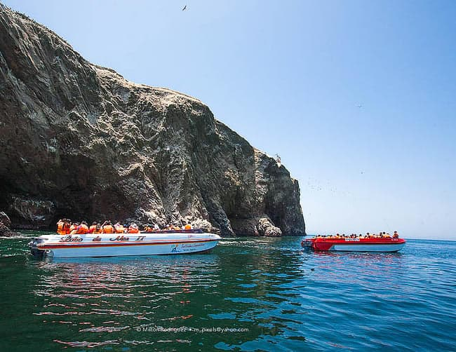 Ballestas Islands Boat Trip