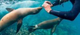 Galapagos & Machu Picchu 21 days