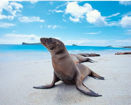 Tours to Machu Picchu and the Galapagos Islands 12 Days