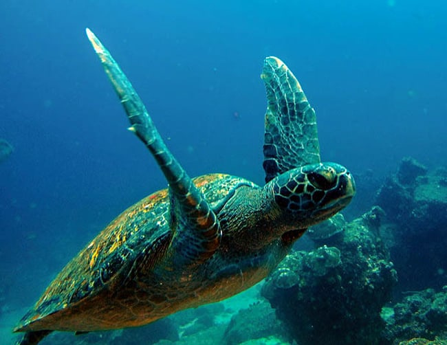 Galapagos and Rainforest Tours Iletours