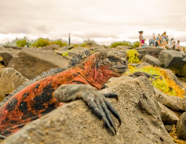 Galapagos Cruise Holidays Iletours
