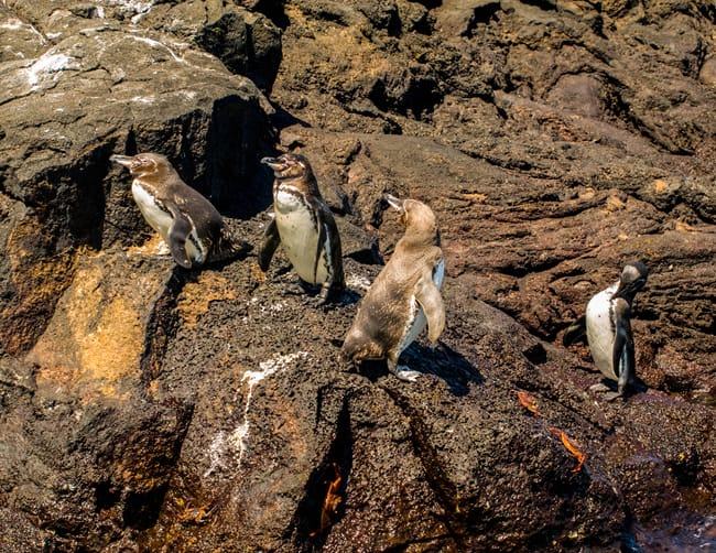 Galapagos Travel with Family Iletours