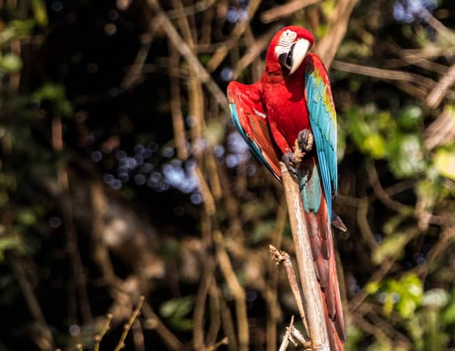 Papagayo Tropical Bird Watching