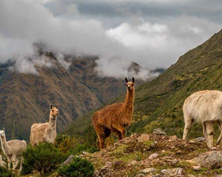 Aguas Termais do Lares, Ollantaytambo, Machu Picchu  04 Dias