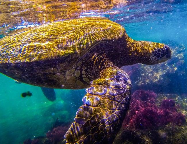Luxury Holidays Galapagos Islands IletoursI