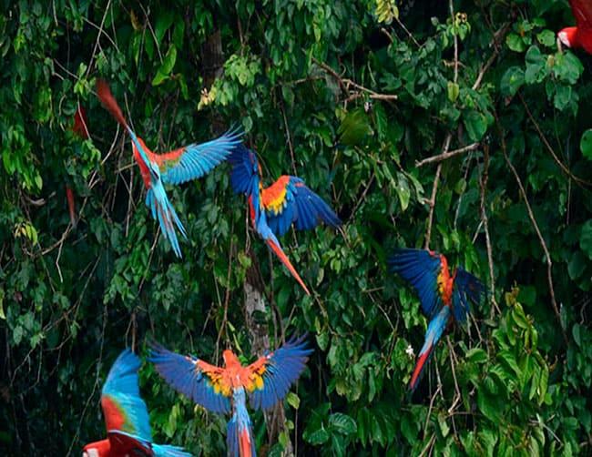 reserva nacional del manu peru