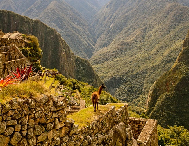 New Year in Machu Picchu Iletours