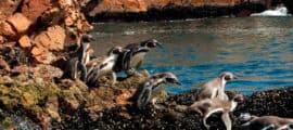 Paracas, Ballestas Islands, Machu Picchu, Titicaca Lake 11 Days