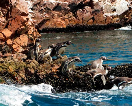 Paracas, Ballestas Islands, Machu Picchu, Titicaca Lake 11 Days