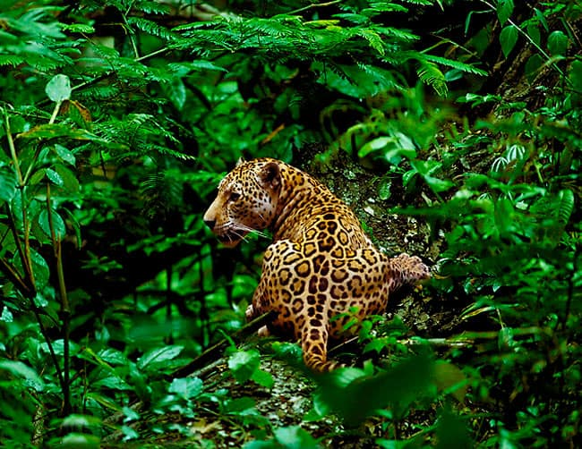 Manu National park Peru Tours