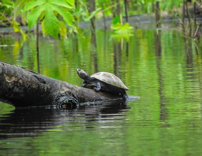 Heath River Wildlife Center   ILE Tours