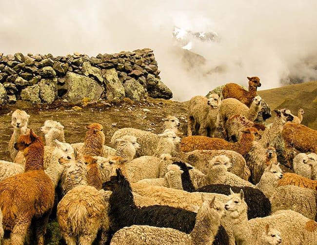 Sacred Valley Cusco Tour Iletours