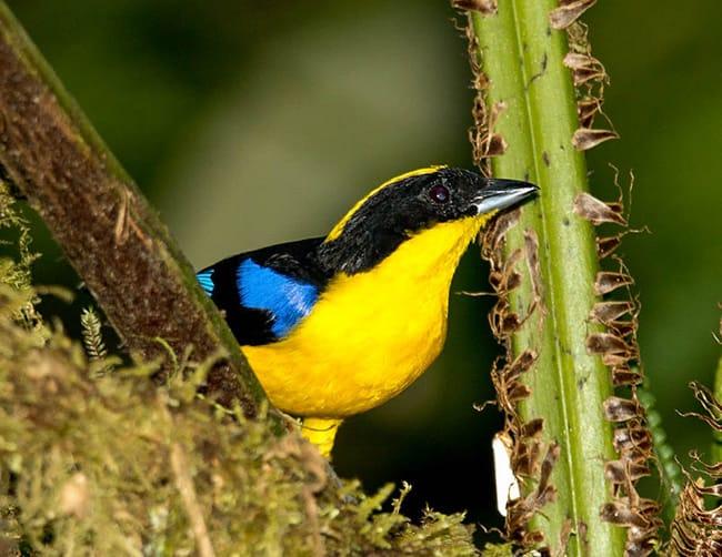 Birdwatching Mindo Ecuador Iletours