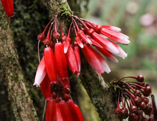 Floresta Equador Reserva Ecológica Quito Mindo Iletours