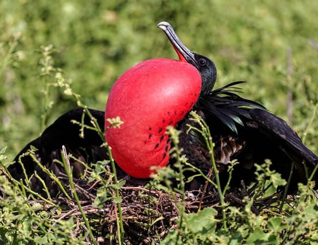 Galapagos Family Holidays Iletours