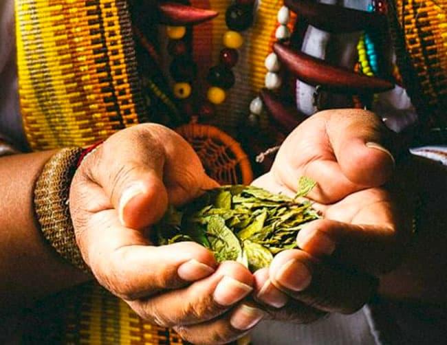 medicina ancestral andina