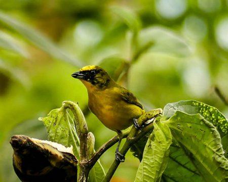 Floresta Equador Reserva Ecológica Quito Mindo  01 dia