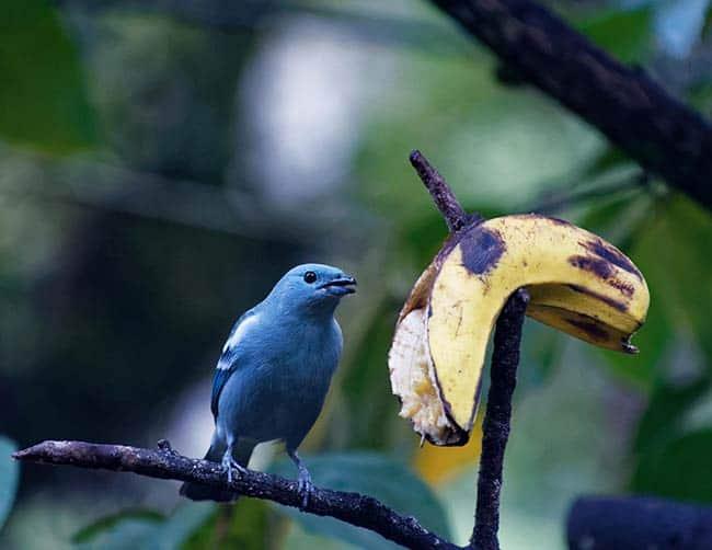 bird watching tours machu picchu
