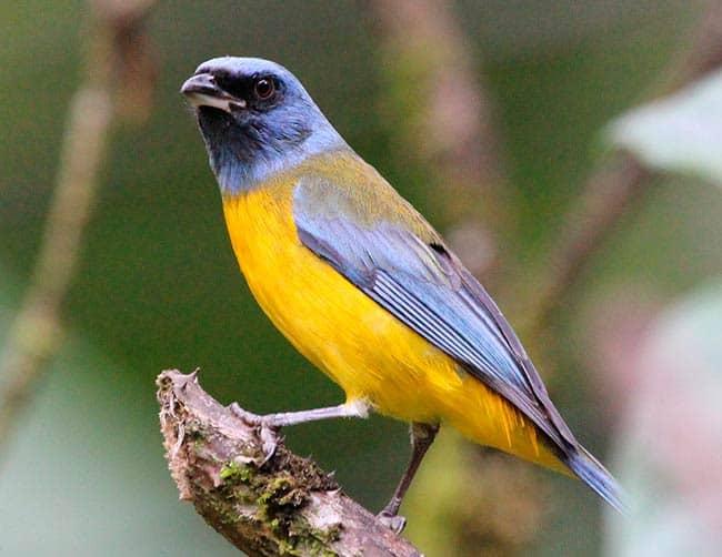 birding cusco peru