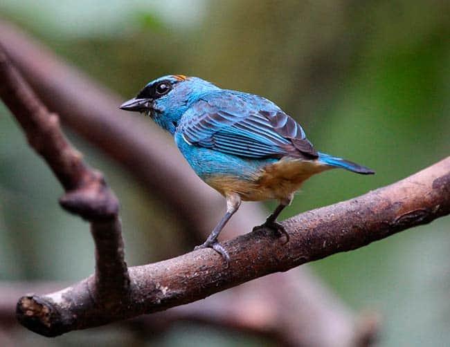birding tours for seniors