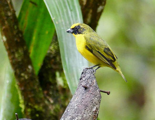 birding tours peru