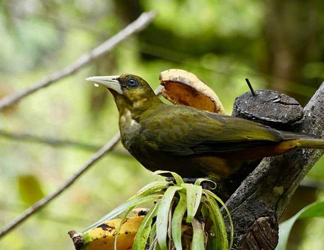 luxury birding tours south america