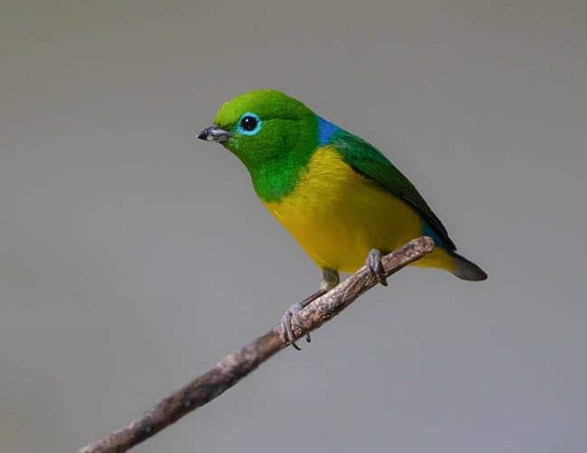 luxury birding tours