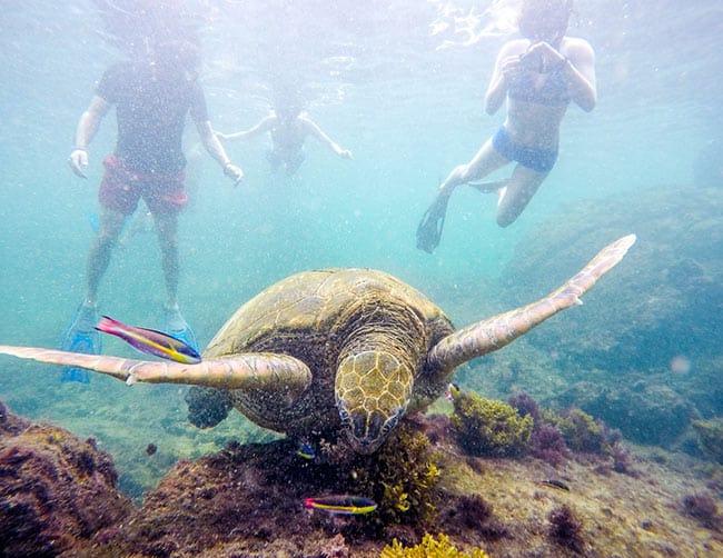 Tortuga Islands on Isabela Island scuba diving